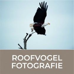 Workshop Module Roofvogel...